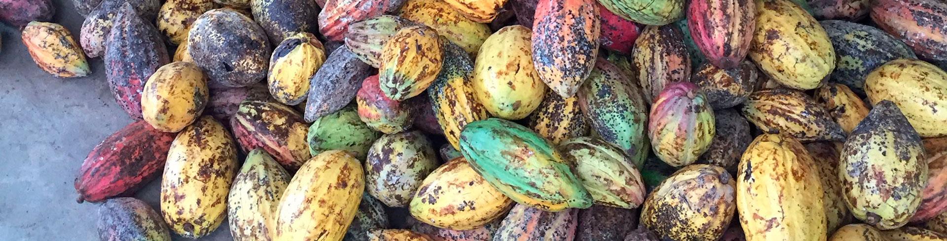 ベトナム産高級チョコレートSOCOLA ロータスとサクラメイン画像04